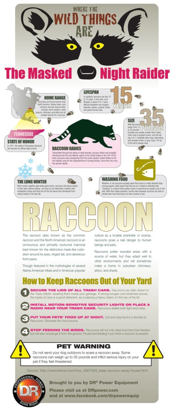 Infographic: Protecting Your Family and Pets from Raccoon Rabies
