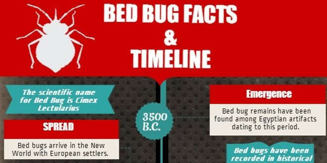 infographic  bedbug facts and timeline