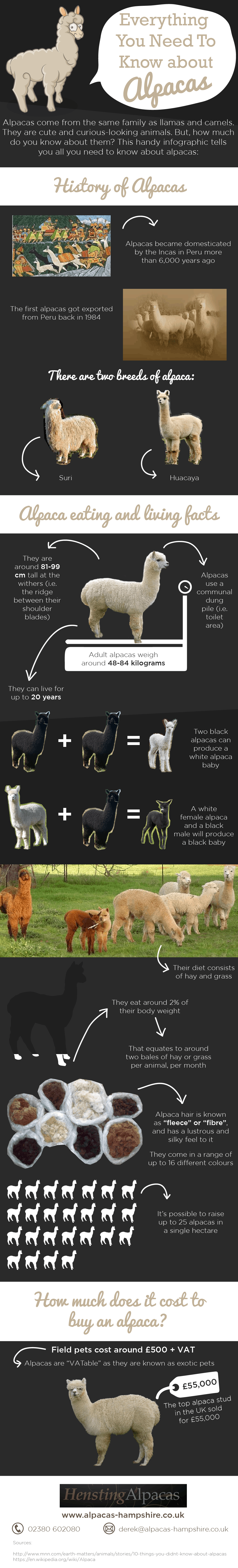 alpacagraphic1