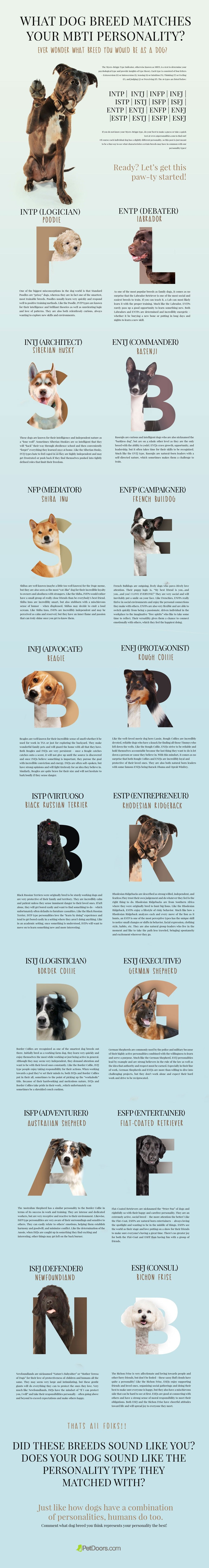 What Dog Breed Matches Your MBTI Personality?