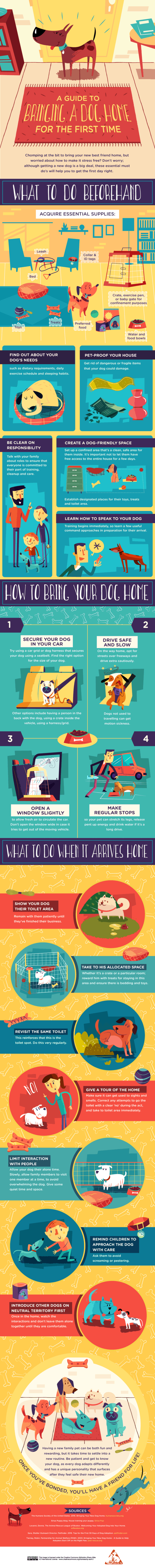 A Guide To Bringing Home Your New Dog